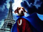 """Cães deixam de ser vistos como """"coisas"""" aos olhos da lei francesa"""