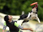 Dog Frisbee: a modalidade