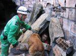GNR recruta civis com cães para busca e salvamento