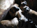 Resgate dos cães de António Tavares