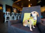 Hotel abriga cães abandonados para hóspedes adoptarem