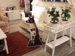 Ikea promove a adopção de animais nas suas lojas