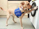 Primeira máquina de lavar controlada por cães