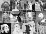 Matilha de Rogil: caçador maltrata os seus cães