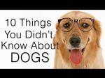 10 coisas que você não sabe acerca de cães