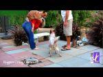 Acrobacias com cães