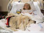 Hospital nos EUA permite presença de cão durante cirurgia