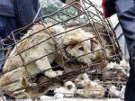 Petição para acabar com o mercado da carne de cão na Tailândia