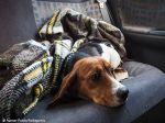 Onde estão os cães resgatados do Instituto Royal