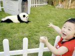 Cães Panda, a última moda chinesa