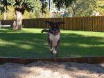 Primeiro parque canino da cidade de Lisboa