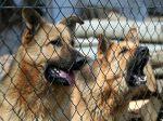 Rapaz atacado por 6 cães em Olhão