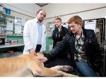 Programa ensina veterinários a apoiar donos em luto pelo animal de estimação