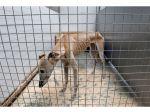 Cão morto à fome em Campo Maior gera onda de revolta