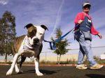 Nova lei sobre cães perigosos entra em vigor a 3 de Agosto