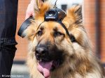 Pensões para cães-policia reformados