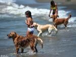 Praia só para cães comemora 15 anos em Itália
