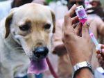 Vacinação Antirrábica divide opiniões entre veterinários
