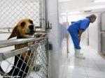 Escândalo Instituto Royal: testes em animais em prol da ciência