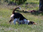 Donos à rasca: o meu cão rebola-se nas fezes de outros cães