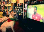 Adepto canino vibra com o último golo de Portugal