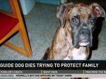 Cão guia morre depois de salvar criança