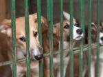 Curso de Etologia Aplicada e Bem-Estar Animal de Cães e Gatos
