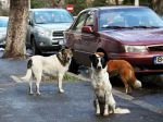 Roménia aprova lei para eutanasiar cães errantes
