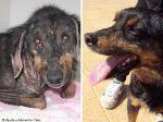 Funchal: cão é salvo da morte e reintegrado na sociedade