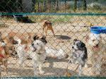 Associação de protecção animal muda de estratégia