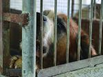 O caso da Sociedade Protectora dos Animais do Porto