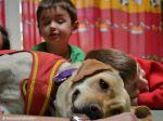 Terapias assistidas com cães