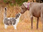Cães e gatos podem viver em harmonia