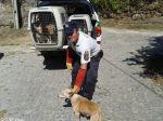 Viseu: Apreensão de 11 cães a viver em condições deploráveis