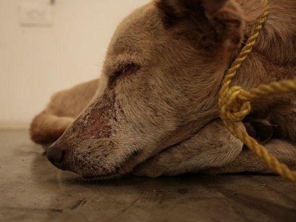 Foto Maus tratos animais e consequências legais