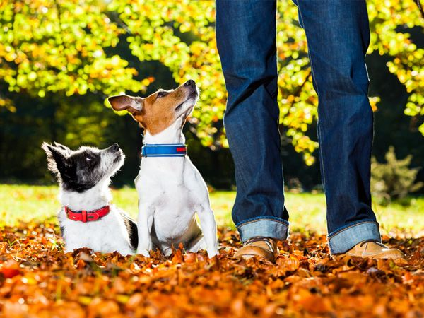 Foto 5 frases que os donos de cães não devem dizer (PARTE 1)