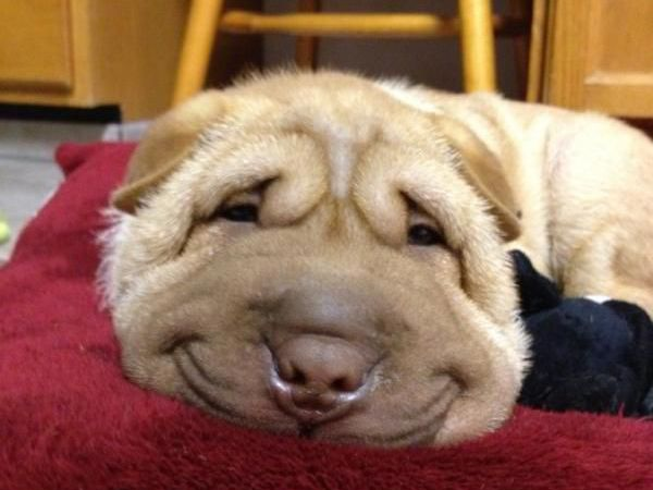 Foto 10 Lições de vida dadas pelos cães