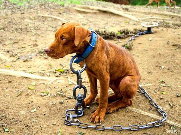 Foto EUA: Prender cães tornou-se ilegal em Nashville