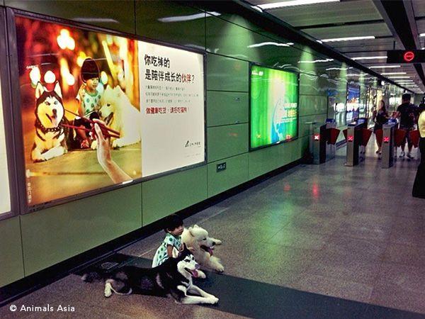 Foto China ONG lança campanha contra consumo de carne de cão