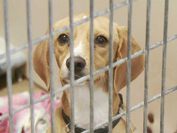 Foto Todos os cães e gatos vendidos em lojas de animais têm de vir de canis