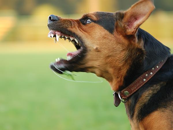Foto Se você for agressivo, o seu cão também o será