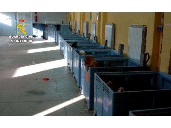 Foto Apreendidos 600 animais de companhia ilegais vindos do Leste