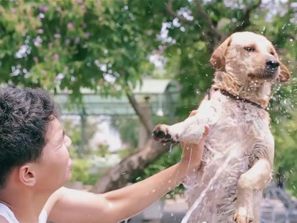 Foto Homem dedica-se a dar banho a cães de rua