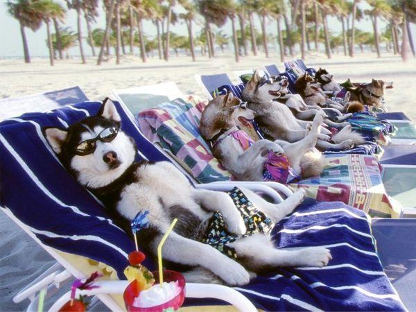 Foto Proteja o seu cão do sol