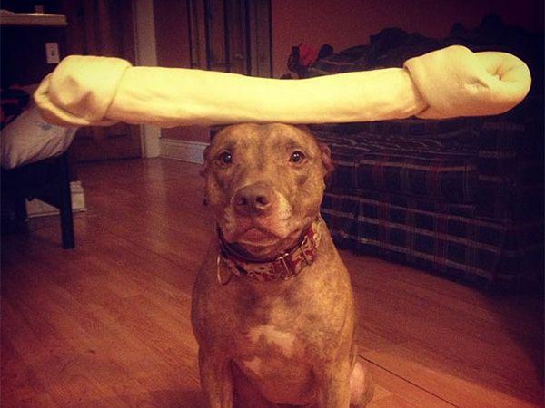 Foto Scout, um cão com uma paciência incrível