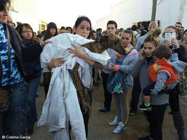 Foto Cães de Mairena foram resgatados