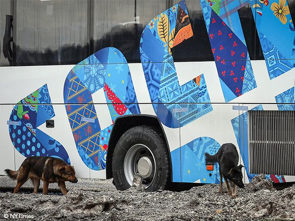Foto Uma corrida para salvar os cães vadios de Sochi