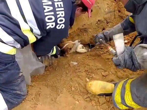 Foto Bombeiros de Rio Maior salvam cão de forma extraordinária