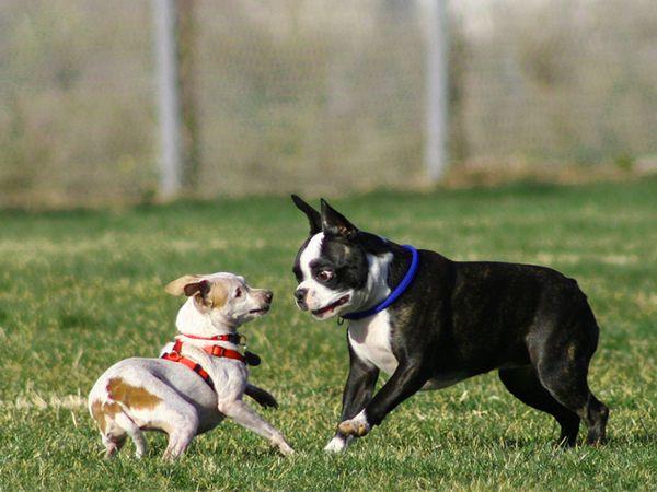 Foto Cães que não devem frequentar parques caninos