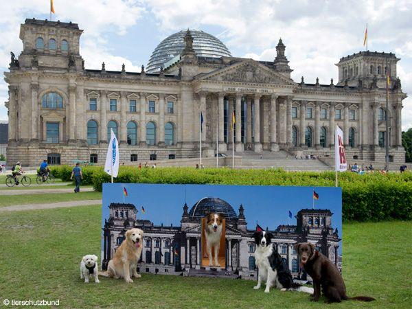 Foto Cães no trabalho aumentam a produtividade alemã